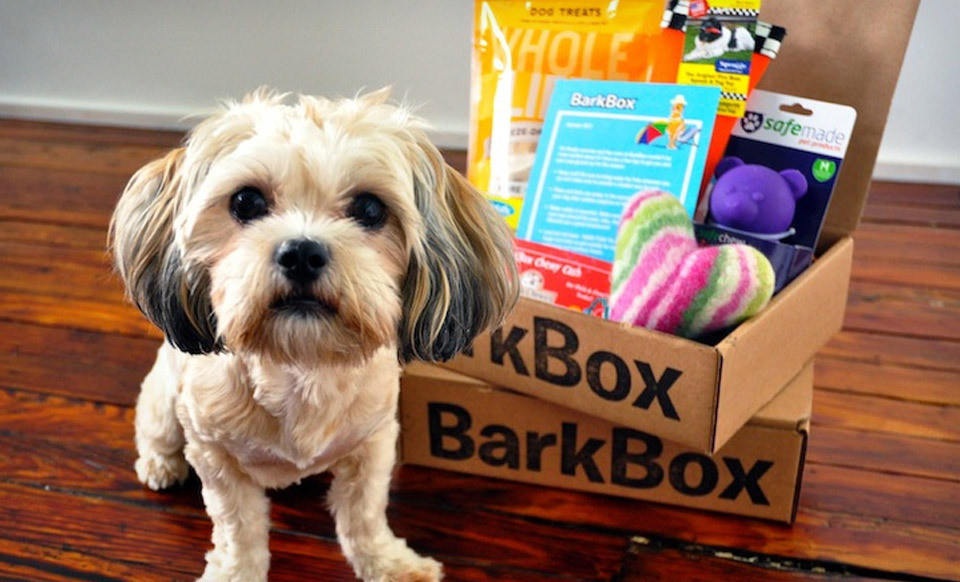 BarkShop Live by Bark and Company - Emerging Magazine